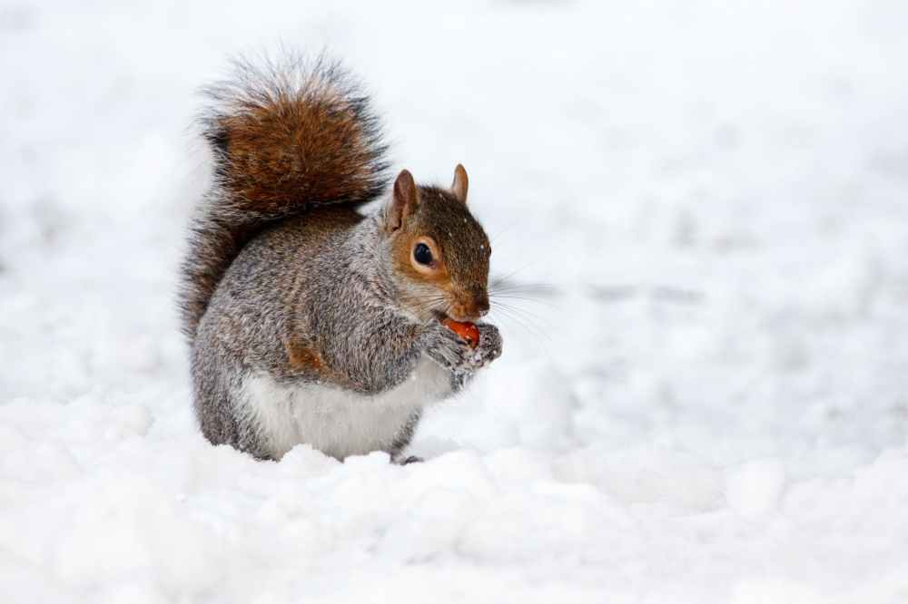 animal-brown-cold-creature-87769.jpeg